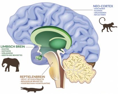 brein.2